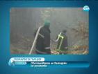 Наши пожарникари помогнаха за овладяване на огъня на Халкидики