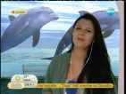 Варненският делфинариум вече предлага плуване с делифини