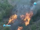 Уникални дървета са застрашени от огромен пожар в Гърция