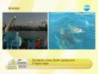 Учени броят делфините в Черно море