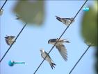 Бяла лястовица дава надежда в пернишкото село Велковци