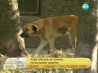 """""""Четири лапи"""": Хората масово тровят кучета в парковете"""