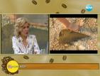 Взета мида от плажа на Хърватия води до затвора