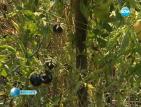 Химик отглежда черни домати и сини чушки