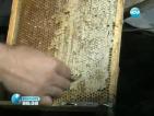 Рекордно ниски добиви на мед отчитат производителите
