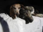 Разтърсващи истории за уличните кучета в София