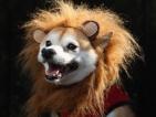 Кученца по костюми