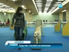 Циркови котки, гълъби и премиерско куче на Международната киноложка изложба