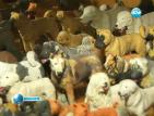 Самоук скулптор направи 200 миниатюри на кучета от пластилин