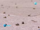 България иска забрана на пестицидите, които убиват пчелите