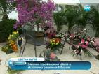 Екзотични растения ще красят Морската градина в Бургас
