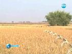 ЕС призова за проверки на пшеницата, внасяна от САЩ