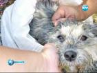 31 000 евро глоба за грък, изхвърлил кучето си от автомобил