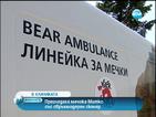 Прегледаха мечока Митко със свръхмодерен скенер