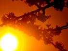 Над 1200 души пострадаха от горещините в Япония