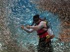Шведите ще пазят тестисите си от хищна риба