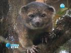 Откриха рядък вид малък бозайник