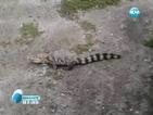 Полицията в Екатерининбург издирва избягал крокодил