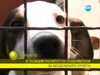 Осиновяването на бездомни кучета набира популярност у нас
