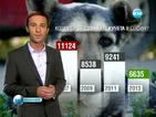 Над 6000 са бездомните кучета в София