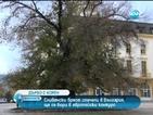 """""""Старият бряст"""" в Сливен спечели конкурса """"Дърво с корен"""""""
