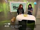 Как Фейсбук обява намери кучето Доро