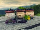 Сладост, веселие и любов на Фестивала на боровинките