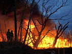 Над 42 000 души гасят пожари в Сибир