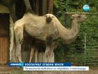Зоопаркът в София отвори врати