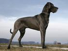 Почина най-високото куче в света
