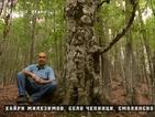 """""""Ничия земя"""": Дървото с костите"""