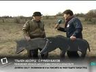 """""""Пълен абсурд"""": Пенсионер изнася шоу с диви прасета край пътя"""