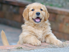 Всяко домашно куче вече ще трябва да е с микрочип