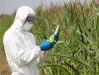 Шотландия ще забрани отглеждането на ГМО