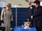 Британската кралица спира развъждането на любимите си кучета