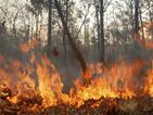 Пожарът край централата в Чернобил е овладян