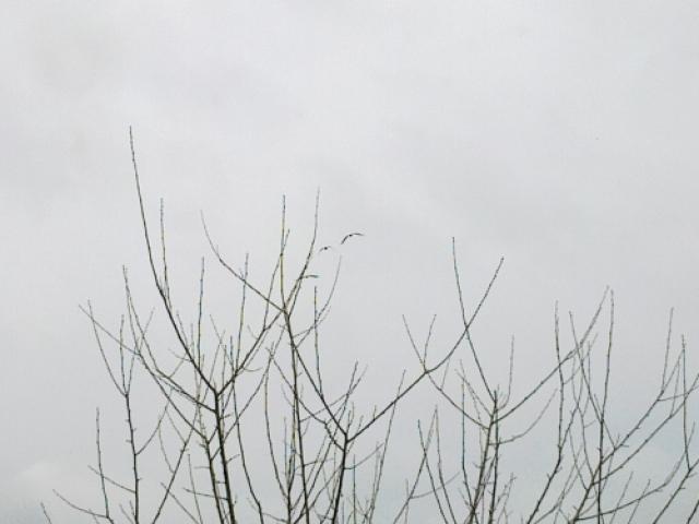 Щъркели на 14.02.2013