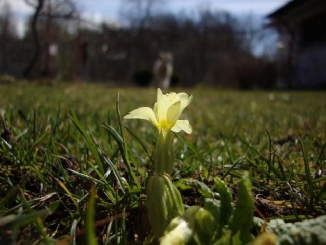 Пролетта дойде
