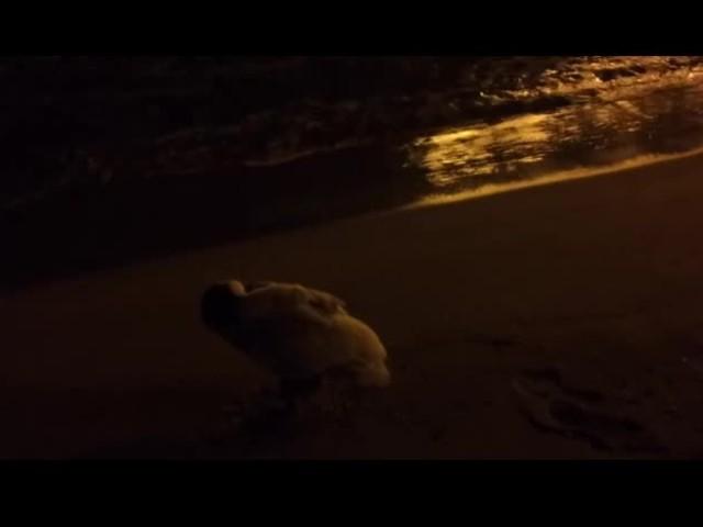 Спящ лебед на плажа