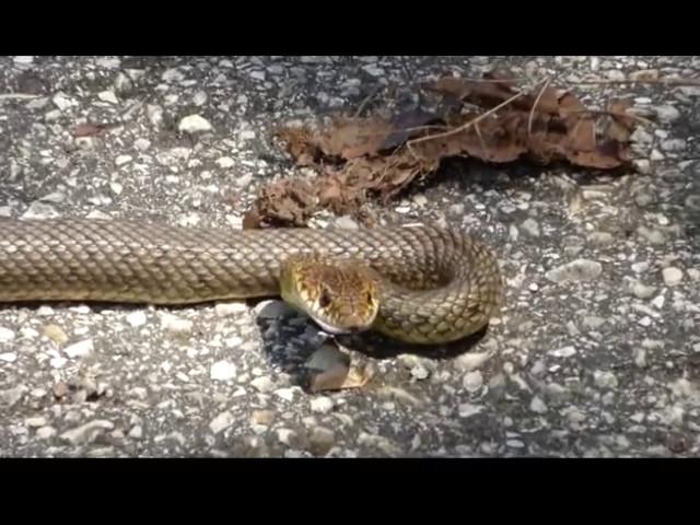 Внимание - топлото времето изкара змиите!