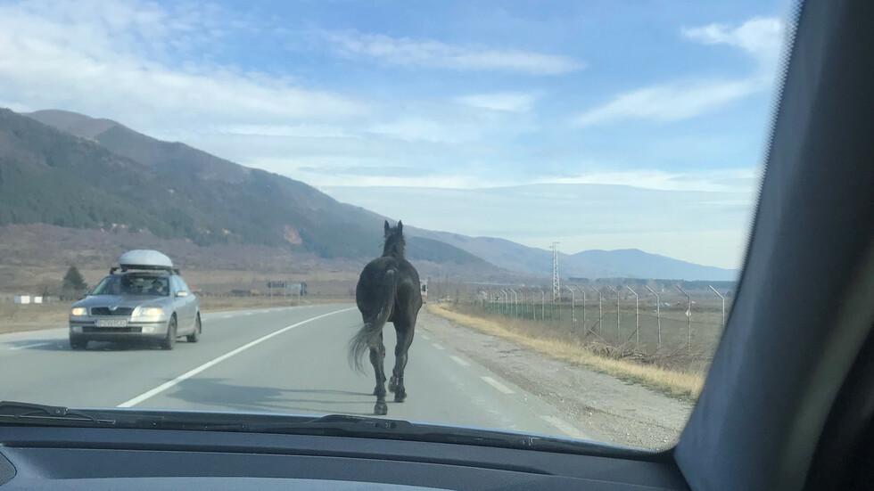 Отново коне на пътя