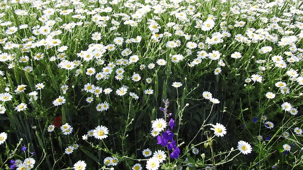 Пролетната красота на природата!