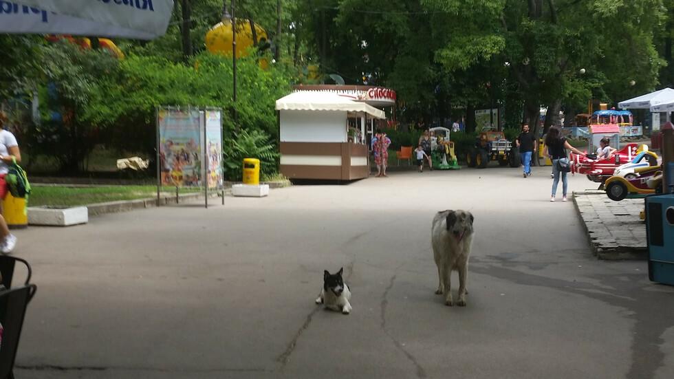 Дали мястото на тези кучета е тук?