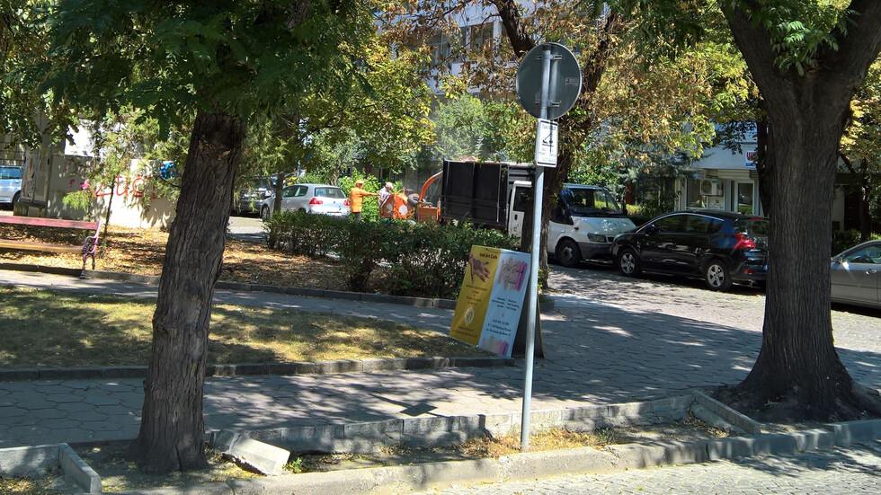 Резитба посред лято в Пловдив