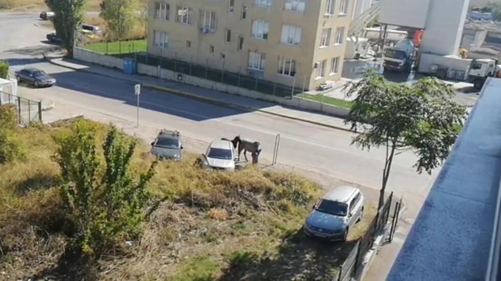 Коне в София