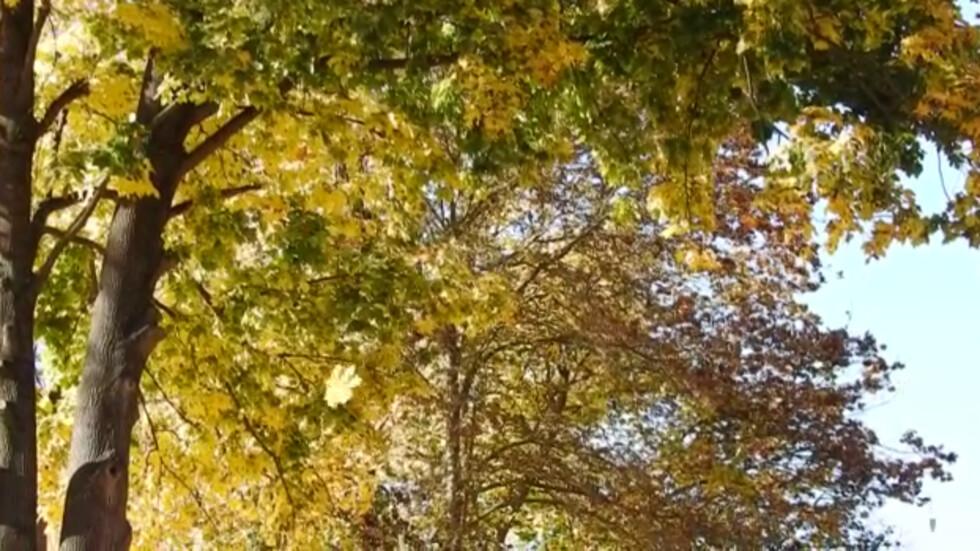 Колко изящно остаряват и падат листата!