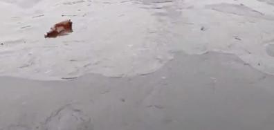 Тече мазут в река Сазлия