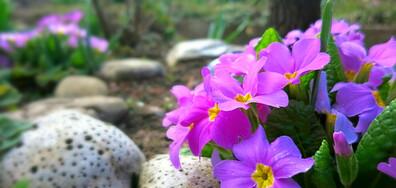 Пролетно вдъхновение от Котел