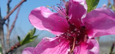Красива пролет
