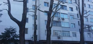 Осакатени дървета във Варна
